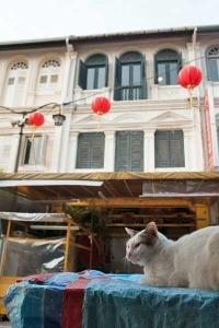 Singapore Chinatown Cat