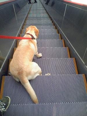 愛子エレベーター
