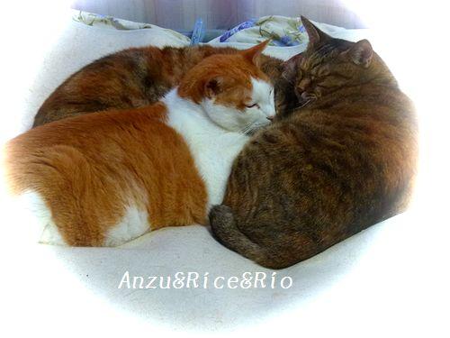 anzuricerio1_20141002144513aaa.jpg