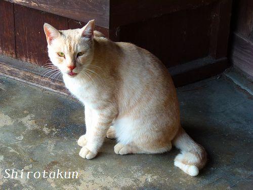 chichibi263.jpg