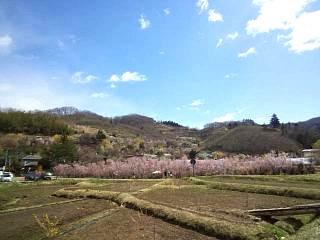 20140405花見山(その2)