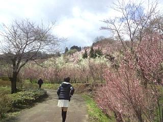 20140405花見山(その5)