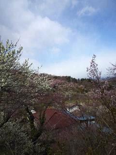 20140405花見山(その11)