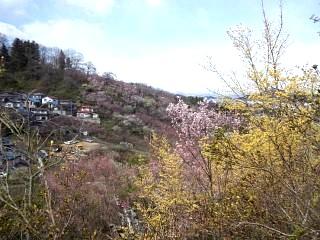 20140405花見山(その14)