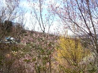 20140405花見山(その17)