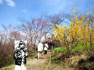 20140405花見山(その22)
