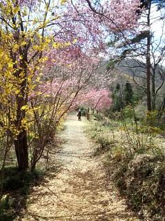 20140405花見山(その28)