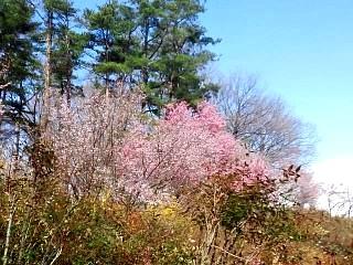 20140405花見山(その29)