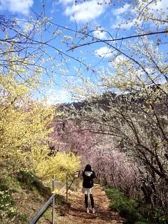 20140405花見山(その32)