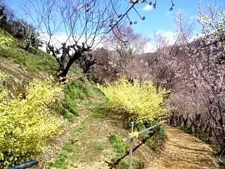 20140405花見山(その35)