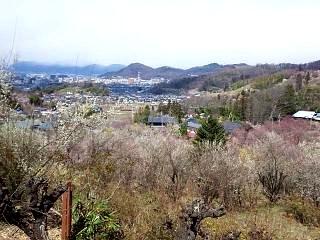 20140405花見山(その40)