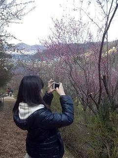 20140405花見山(その43)