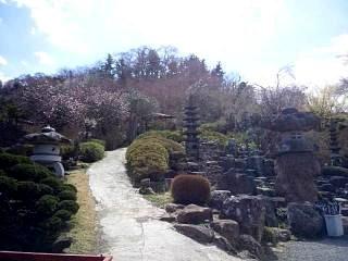 20140405花見山(その47)