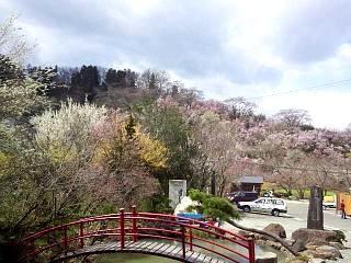 20140405花見山(その49)