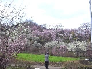 20140405花見山(その51)