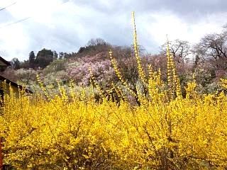20140405花見山(その52)
