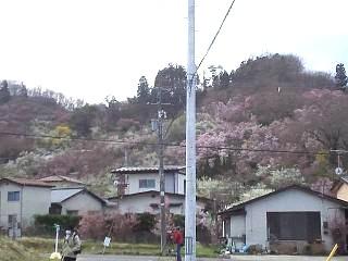 20140405花見山(その56)