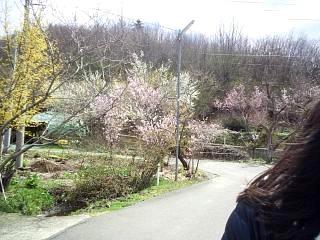 20140405花見山(その58)