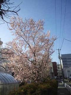 20140409桜(その1)