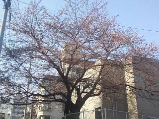 20140410桜