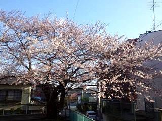20140411桜(その1)