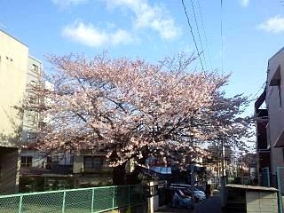 20140411桜(その2)