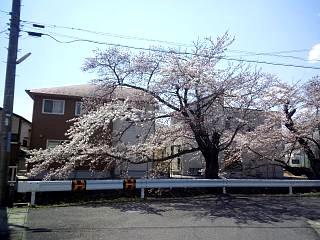 20140412開成山桜(その8)