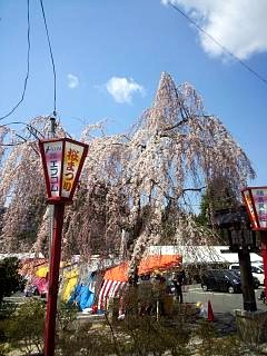 20140412開成山桜(その11)