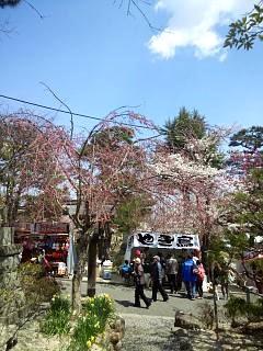 20140412開成山桜(その15)