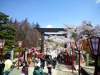 20140412開成山桜(その17)