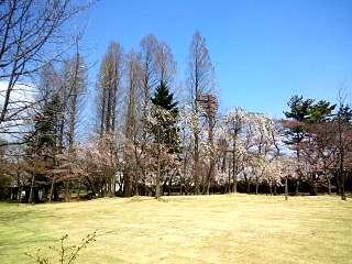 20140412開成山桜(その18)