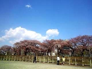 20140412開成山桜(その19)