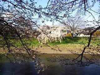 20140412逢瀬川(その2)