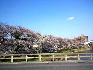20140412逢瀬川(その5)