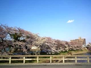 20140412逢瀬川(その6)