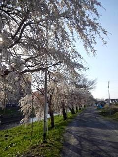 20140412逢瀬川(その7)