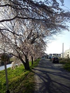 20140412逢瀬川(その8)