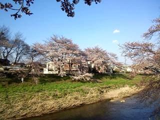20140412逢瀬川(その14)