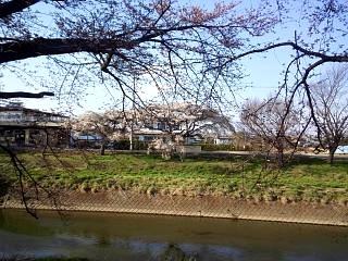 20140412逢瀬川(その15)