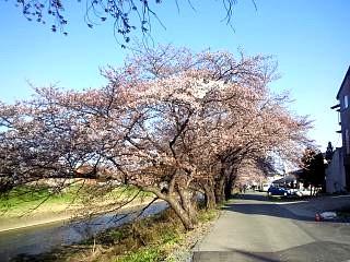 20140412逢瀬川(その17)