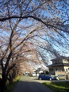 20140412逢瀬川(その18)