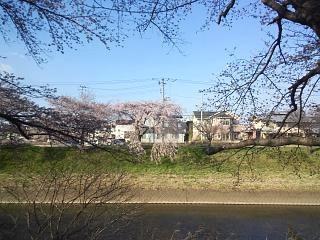 20140412逢瀬川(その19)