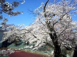 20140413逢瀬川(その1)