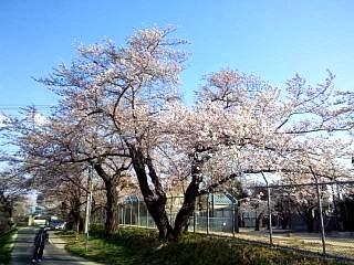 20140413逢瀬川(その4)