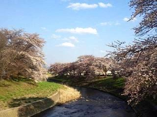 20140413逢瀬川(その6)