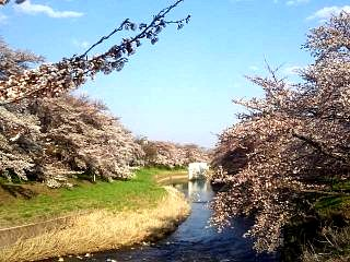 20140413逢瀬川(その7)