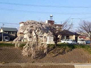 20140413逢瀬川(その17)