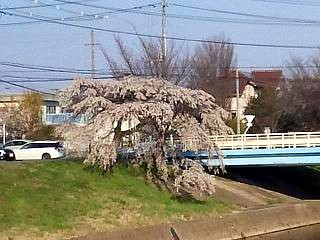 20140413逢瀬川(その19)
