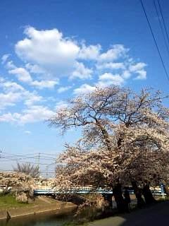 20140413逢瀬川(その20)