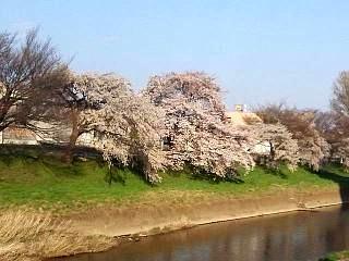 20140413逢瀬川(その24)